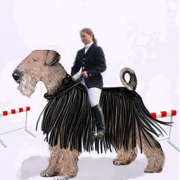 freetoedit dog horseback interesting funny