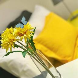 yellow buterffly flowers freetoedit srcbutterfly