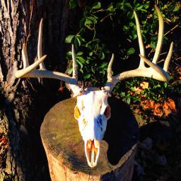 rackonoutdoors deadhead deerskull collectingbone
