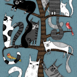 catbackgrounds backgrounds freetoedit cats cat