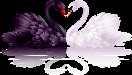 swans ftestickers freetoedit