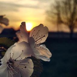 freetoedit sunrise spring morning yesterday