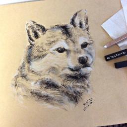 art drawing charcoal akitadog shibainu