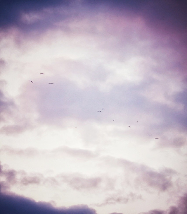The sky again 😍 Instagram: lily.1424  #myphotography #sky #clouds #birds #interesting #freetoedit