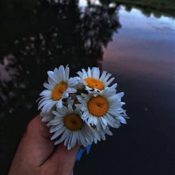 freetoedit remix remixit photo flowers