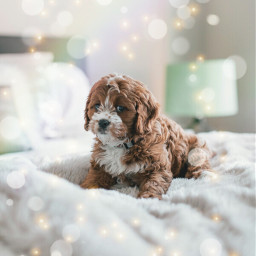 dog pup puppy adorable cute freetoedit