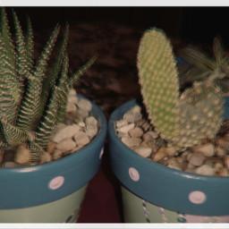 freetoedit plant suculents cactus