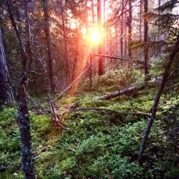 pcsunset sunset nature forest naturephotography