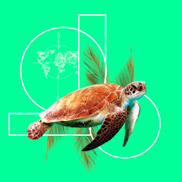freetoedit turtle green bold bright