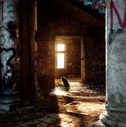 photography summer abandonedhouse abandoned house