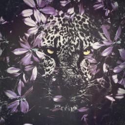 leaves jaguar doubleexposure eyeshine wildanimal