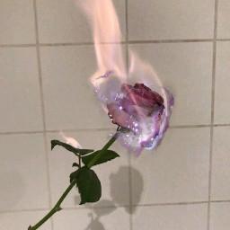 srcglittergalaxy glittergalaxy freetoedit rose fire