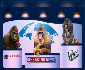 1000 awesome worldmap images on picsart monkeys news fruit worldmap gumiabroncs Gallery
