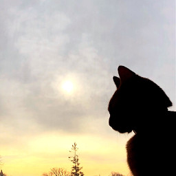freetoedit sillouette cats