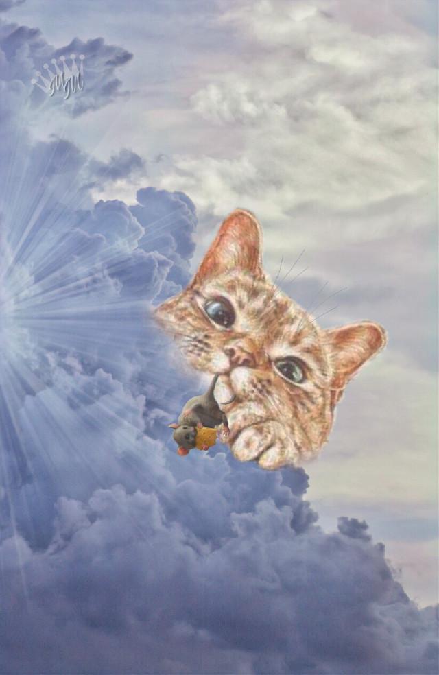 Good Night 🌙 my dear friends 😊  #freetoedit #cute #cat #editedbyme #surreal #clouds #art #artistic