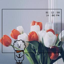 bt21rj kimseokjin flowers orangeandwhite freetoedit