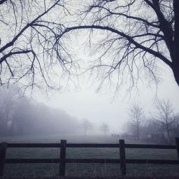 morningmist foggy nature stillness foggymorning