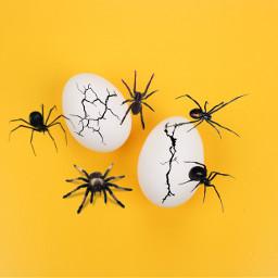 freetoedit ecwhatisyourfearfactor fearfactor challenge spiders
