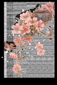 ftestickers bird birds flower flowers freetoedit