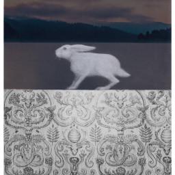 ircbunnyrabbit bunnyrabbit freetoedit