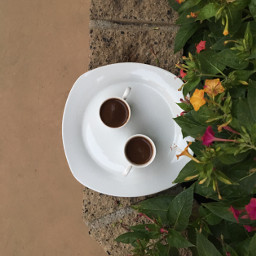 tb nofilter noedit coffee flowers freetoedit