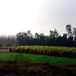 pcdownonthefarm downonthefarm field photographychallenge