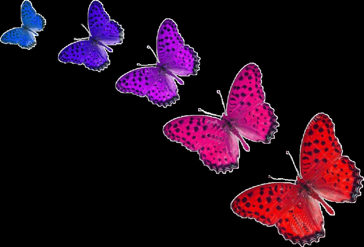 Imagenes De Mariposas De Colores: Sticker By Gabriela Paolella
