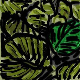 dcaestheticplants aestheticplants