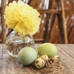 pccelebratingeaster celebratingeaster ranunculus eggs feather
