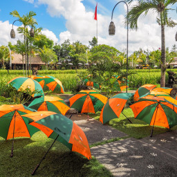 freetoedit pcumbrellas umbrellas umbrellasisee pcumbrellasisee
