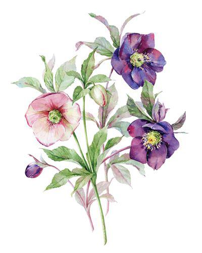 Flores Vintage Flower Edit Recurso Antiguo