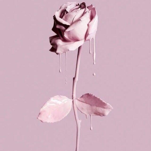 Pink Rose Tumblr Image By Tumblr1640