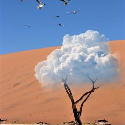 cloudtree freetoedit