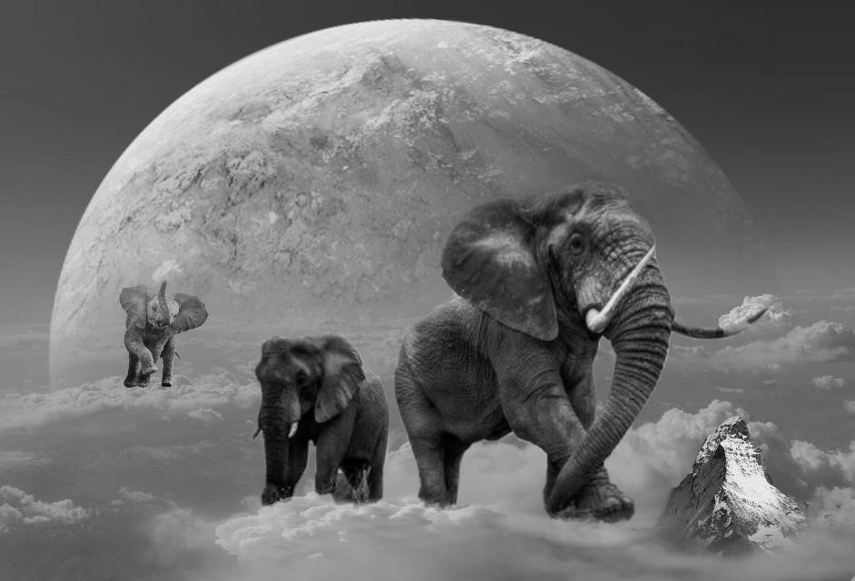 #freetoedit #blackandwhite #elephant #fantasy
