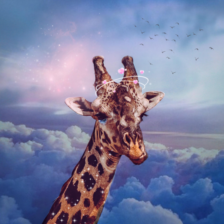 самый картинка с жирафами налейте мне еще его