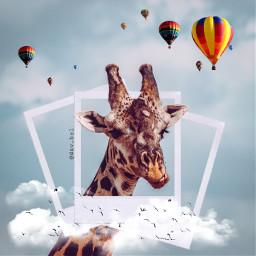 ircgiraffe giraffe freetoedit jiraffe animal