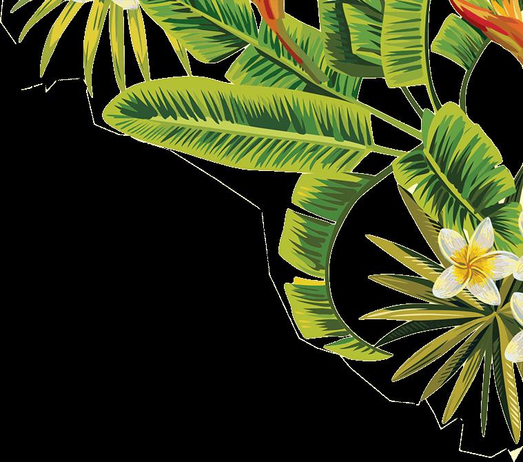 leaves leaf tropical green palmtree california nature...