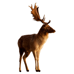 moose deer antlers antler animal freetoedit