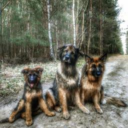 siblings dogsofpicsart pcpets pets