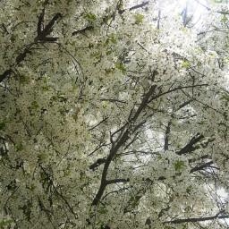 nature spring springtime springflowers freetoedit