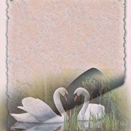 freetoedit editedbyme madewithpicsart background paper swans