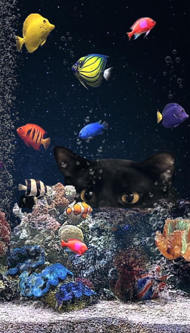 #blackcatstickerremix @reggie7