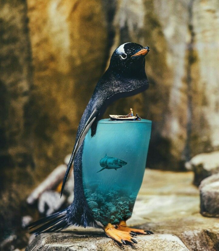 P E N G U I N Penguin Aqua Animal Surreal Ocean Water D