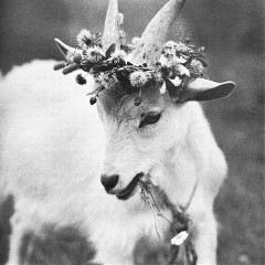 the_goat_666