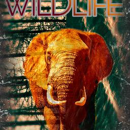 freetoedit ircelephants elephants