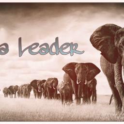 freetoedit bealeader leader leadership leaders