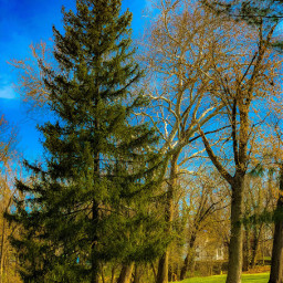 large vintage cool massive treesoflife