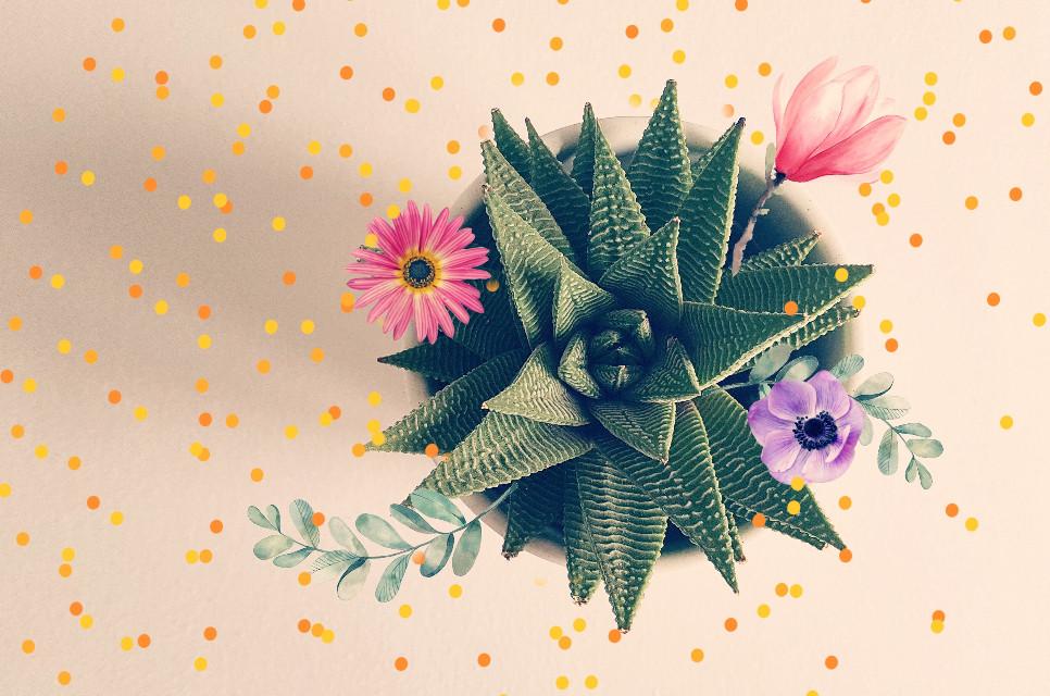 #freetoedit #plants #flower