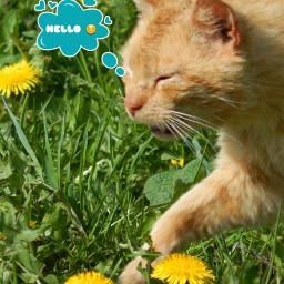 hello mycat mójkot rudzik animals