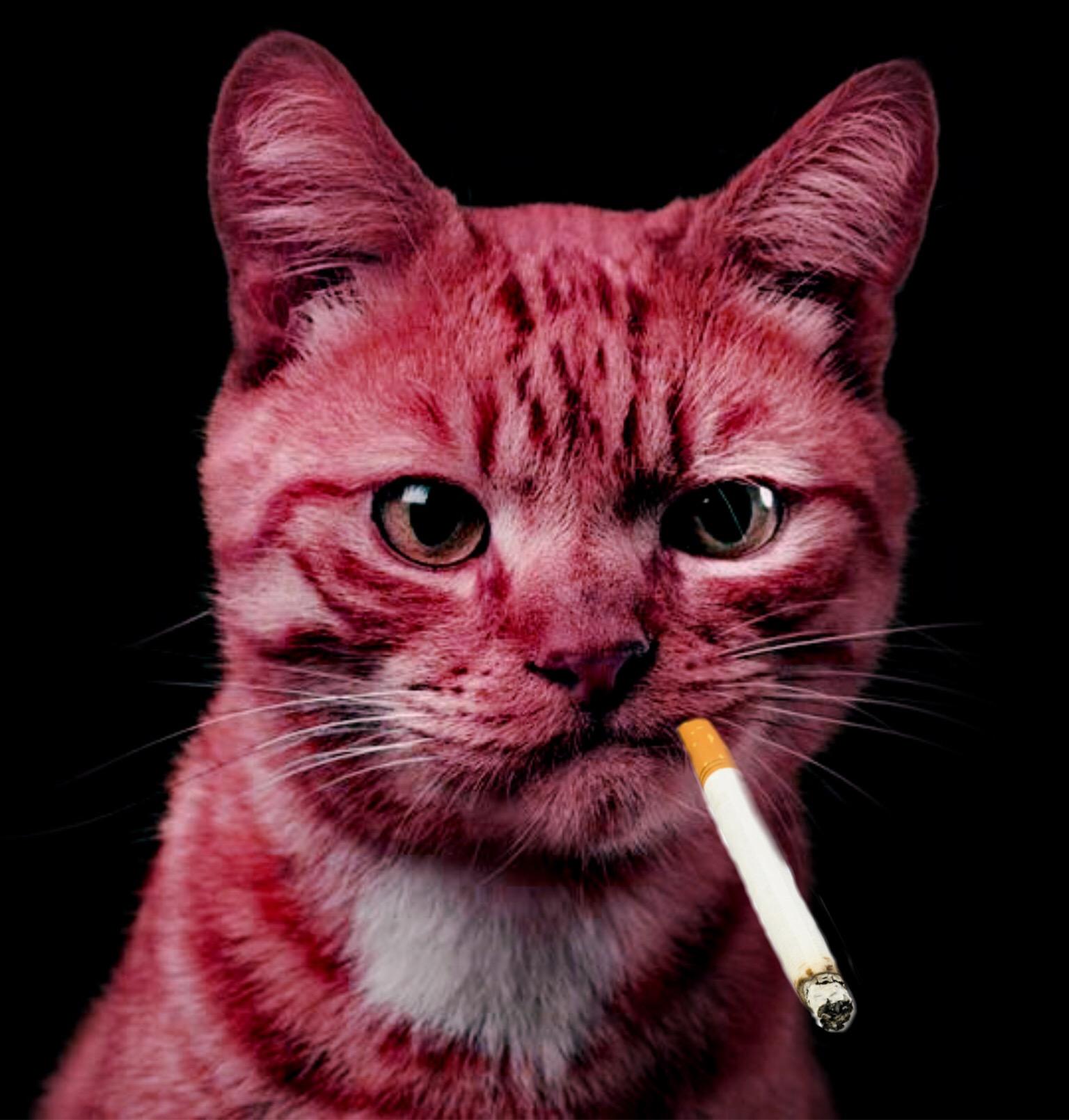 фото кота с сигаретой в зубах мужского трёхглавого